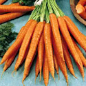 aliment carotte bouillie goutt e carrot boiled drained valeur nutritive calories. Black Bedroom Furniture Sets. Home Design Ideas